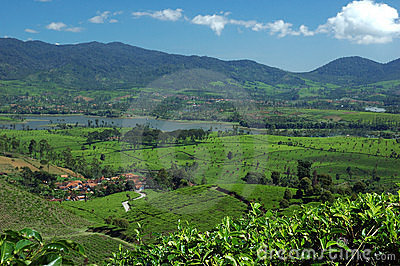 Tea Plantation 3,view at the lake Cileunca
