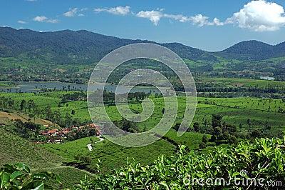 Tea Plantation 3,view at the lake Cileunca