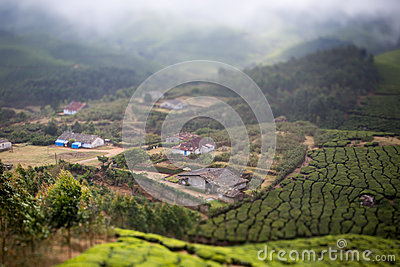 Houses in the middle of a tea plantation