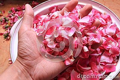 Tea rose petals