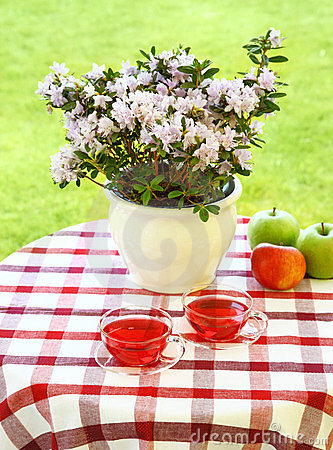 Tea served in the garden