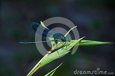 Teal Dragonfly On A Green Leafed Plant During Daytime Free Public Domain Cc0 Image