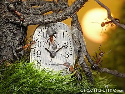 Team of ants adjusting time on clock, teamwork