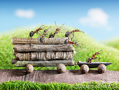 Team of ants carry logs with trail car, teamwork