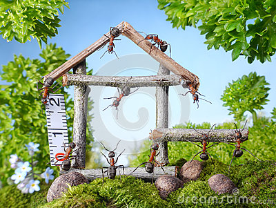 Team of ants constructing wooden house, teamwork