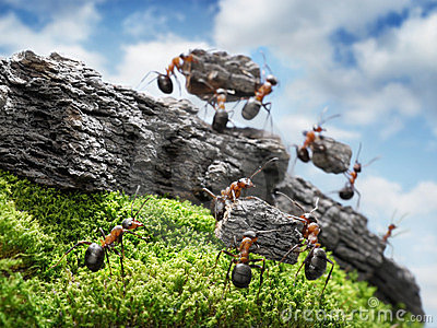Team of ants costructing Wall, teamwork concept