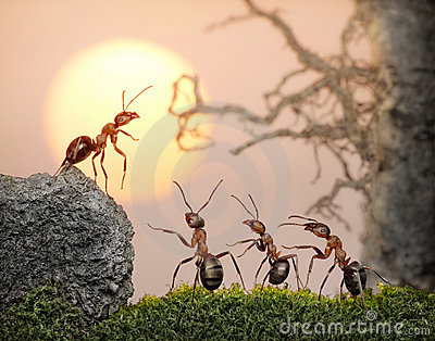 Team of ants, council, collective decision in work