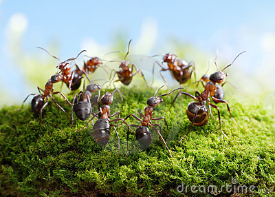 Team of ants, dance of hunters