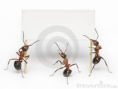 Team of ants holding blank, message or billboard