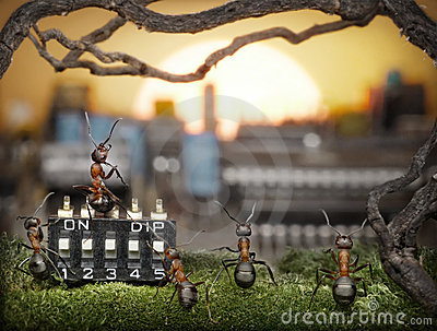 Team of ants managing sunrise, fantasy