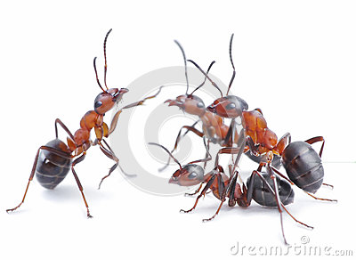 Team of ants, meeting concept