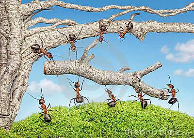 Team of ants work with branch, teamwork