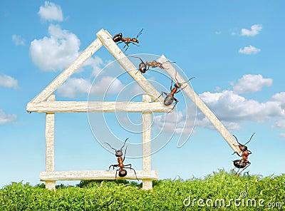 Team of ants work constructing house, teamwork