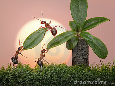Team of ants work with leaves of palm, teamwork