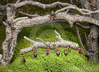 Team of ants work in rusty forest, teamwork
