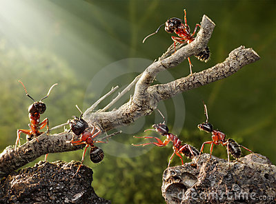 Team of ants work with tree, teamwork