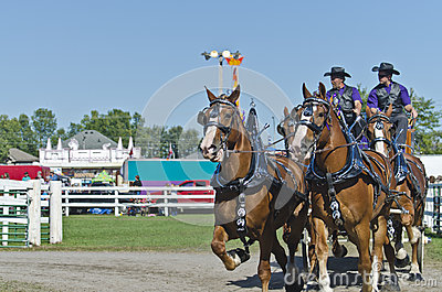 Team of Belgian Draft Horses at Country Fair Editorial Image