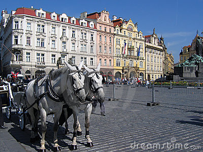 A team of horses at the Old town Square in Prague.