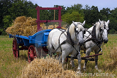Team of Horses Pulling Farm Hay Wagon