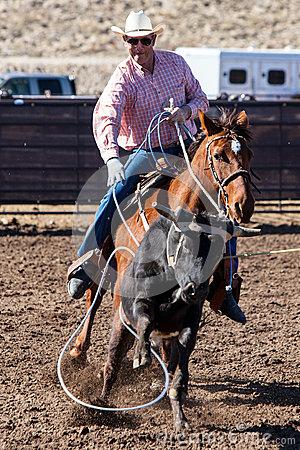 Team Roping in Wickenburg Editorial Stock Image