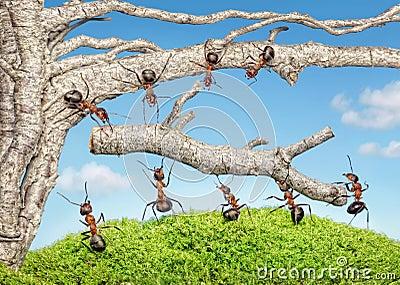 Team van mieren die tak van oude boom nemen