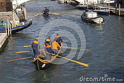 Teams of rowers (Venice) Editorial Stock Image