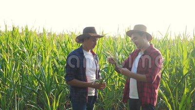 Teamwork smart farming husbandry concept slow motion video. Two men agronomist holds digital tablet touch pad computer. Teamwork agriculture in corn field is stock video
