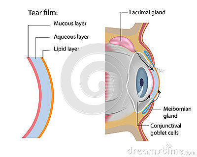 Tear film formation