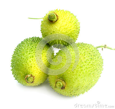 Free Teasel Gourds Stock Images - 33000644