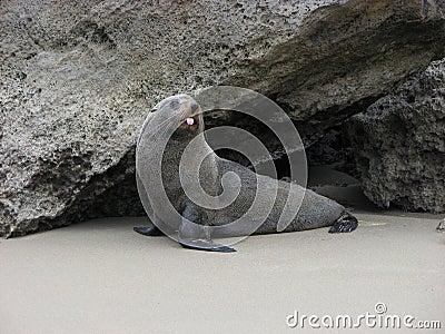 Teasing seal.
