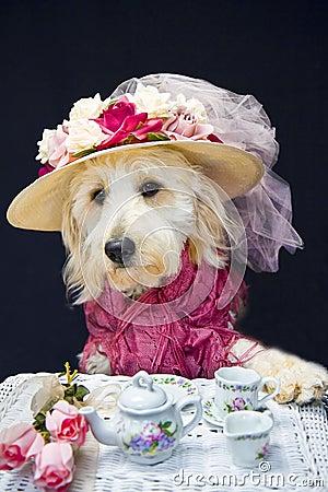 Teatime Doggie