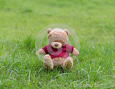 TEDDY BEAR brown color with red shirt sitting on grass Editorial Photography