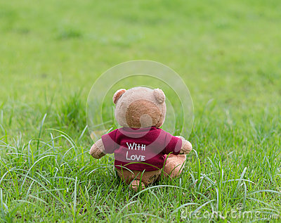 TEDDY BEAR brown color wear red shirt with love sitting on grass Editorial Stock Image