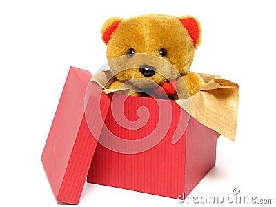 Teddy Bear Inside a Box