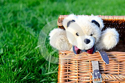 teddy bear in a picnic basket