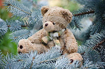 Teddy bear on a pine branch