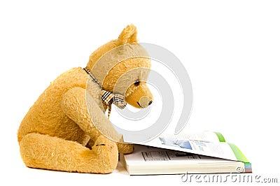 Teddy bear reading a book