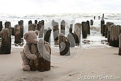 Teddy Bear by sea