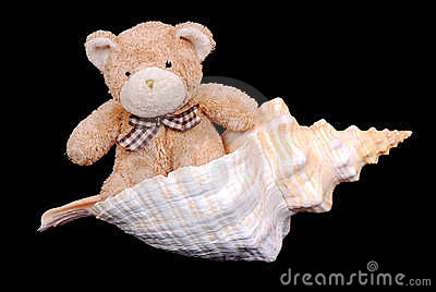 Teddy bear in seashell
