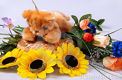 Teddy still-life