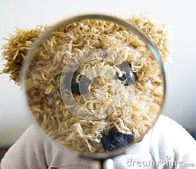 Teddybeer voor verschillende concepten