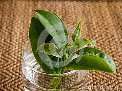 Tee leaves