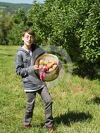 Teen boy in an apple orchard picking fruit