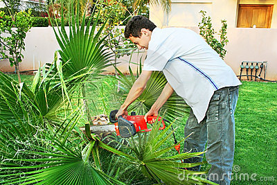 Teen cutting palm