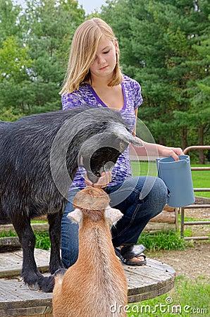 Teen Feeding Goats