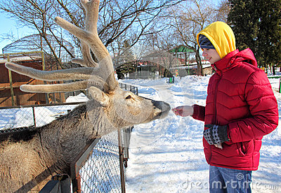 Teenager Feeding Deer in the Zoo