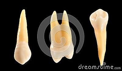Teeth isolated on black