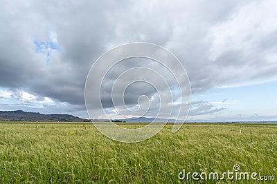 Teff field