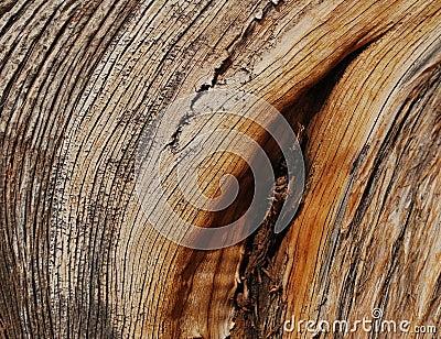 Tekstury jałowcowy drewno