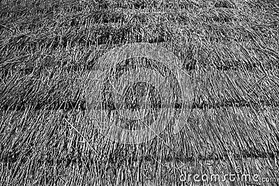 Telhado cobrido com sapê
